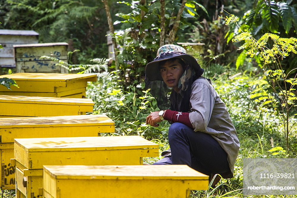Beekeeper at beehives, SeneToui Plantation, Bolaven Plateau, Champasak, Laos