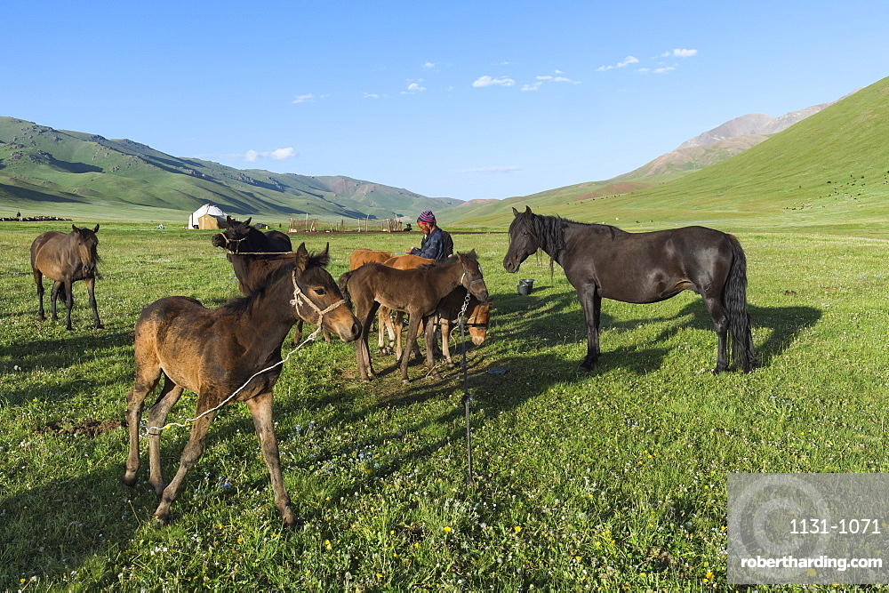 Kyrgyz breeder with his horses, Song Kol Lake, Naryn province, Kyrgyzstan, Central Asia