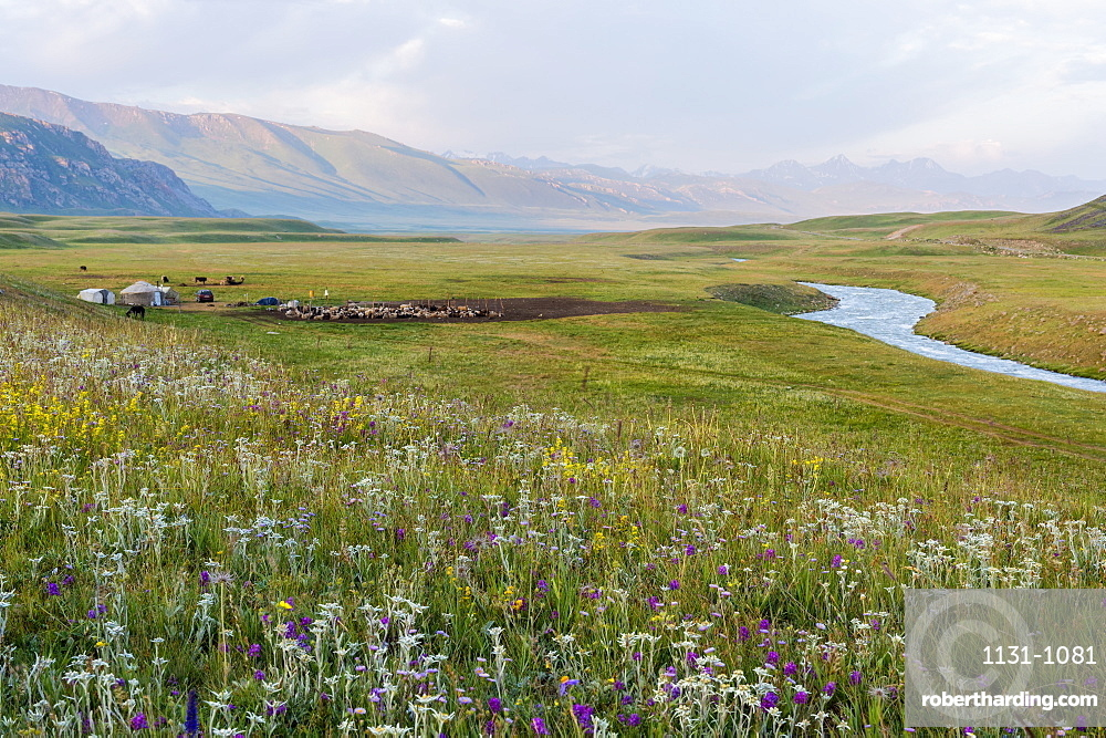 Wildflowers and Yurt settlement, Naryn Gorge, Naryn Region, Kyrgyzstan, Central Asia, Asia