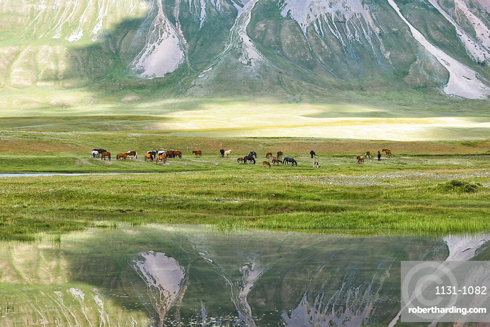 Horses in front of a mountain reflecting in water, Naryn gorge, Naryn Region, Kyrgyzstan