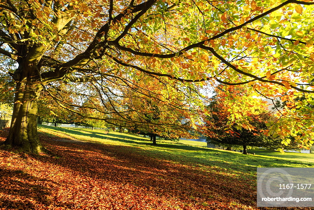 Autumn (fall) colours, Chatsworth Park, stately home of the Duke of Devonshire, Chesterfield, Derbyshire, England, United Kingdom, Europe