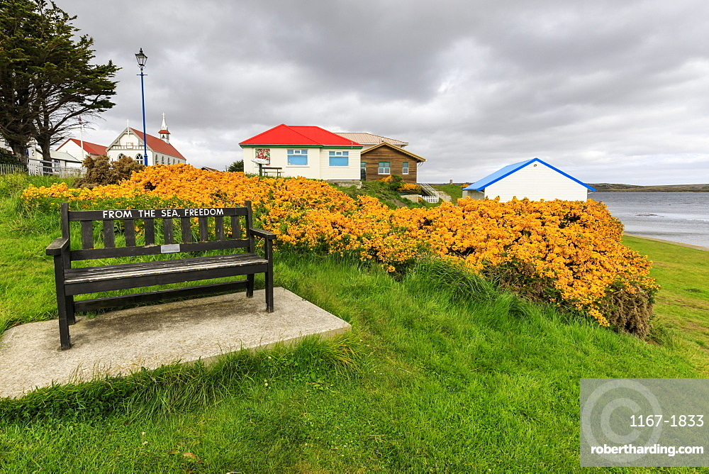 Attractive Victory Green, wooden bench and flowering gorse, church in the distance, Stanley, Port Stanley, East Falkland, Falkland Islands, South America