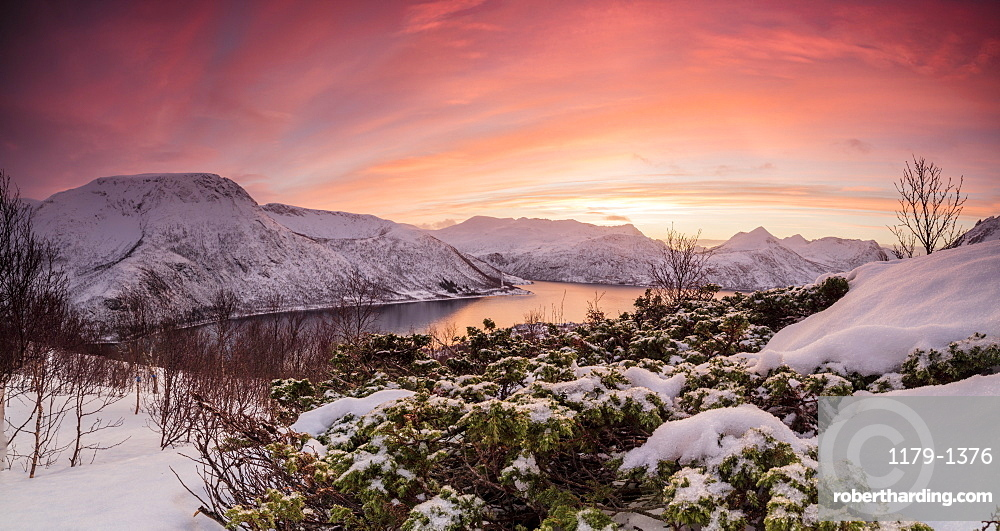 Panorama of frozen sea surrounded by snow framed by the orange sky at sunset, Torsken, Senja, Troms County, Arctic, Norway, Scandinavia, Europe