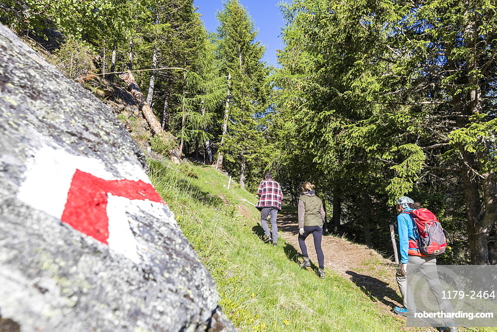 Hikers on path called Sentiero del Carbonaio, San Romerio Alp, Brusio, Poschiavo Valley, Canton of Graubunden, Switzerland, Europe