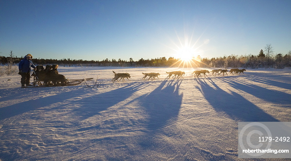 Dog sledding in the snowy landscape of Kiruna, Norrbotten County, Lapland, Sweden, Scandinavia, Europe