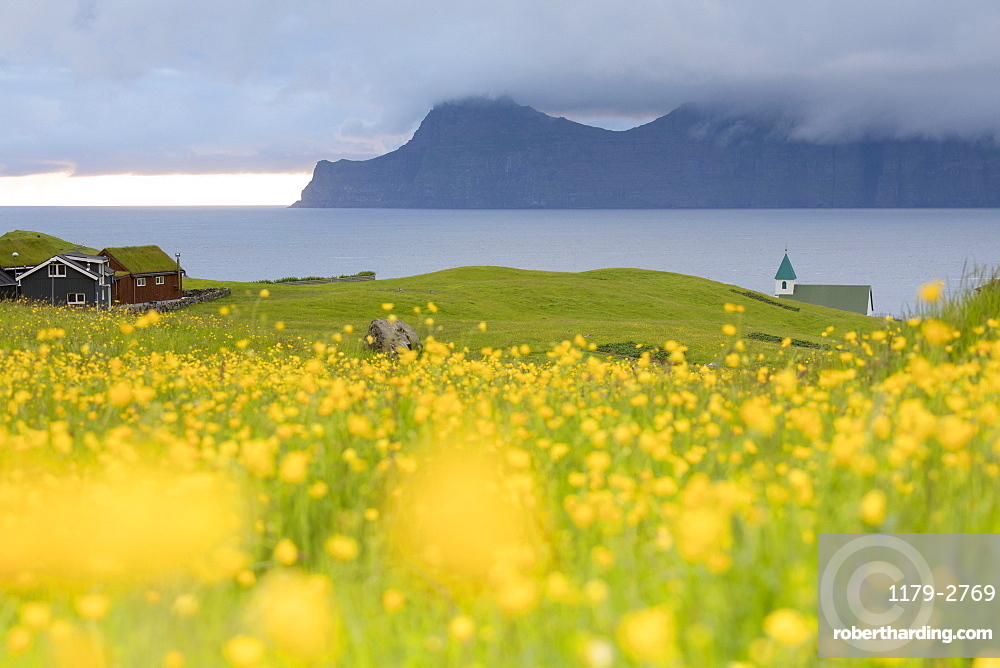Wild flowers on hills towards Kalsoy Island seen from Gjogv, Eysturoy Island, Faroe Islands, Denmark, Europe