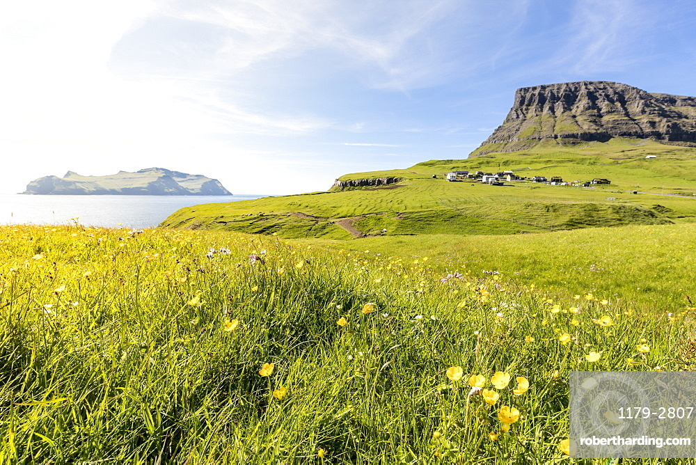 Wild flowers in the green meadows, Gasadalur, Vagar Island, Faroe Islands, Denmark, Europe