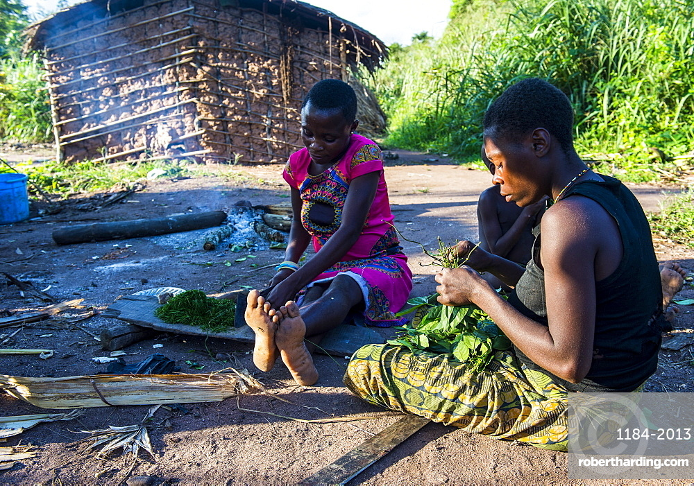 Baka pygmies preparing food in the Dzanga-Sangha Special Reserve, UNESCO World Heritage Site, Central African Republic, Africa
