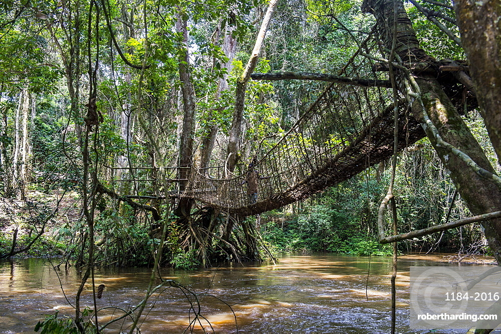 Hand made vine bridge in the Dzanga-Sangha Park, UNESCO World Heritage Site, Central African Republic, Africa