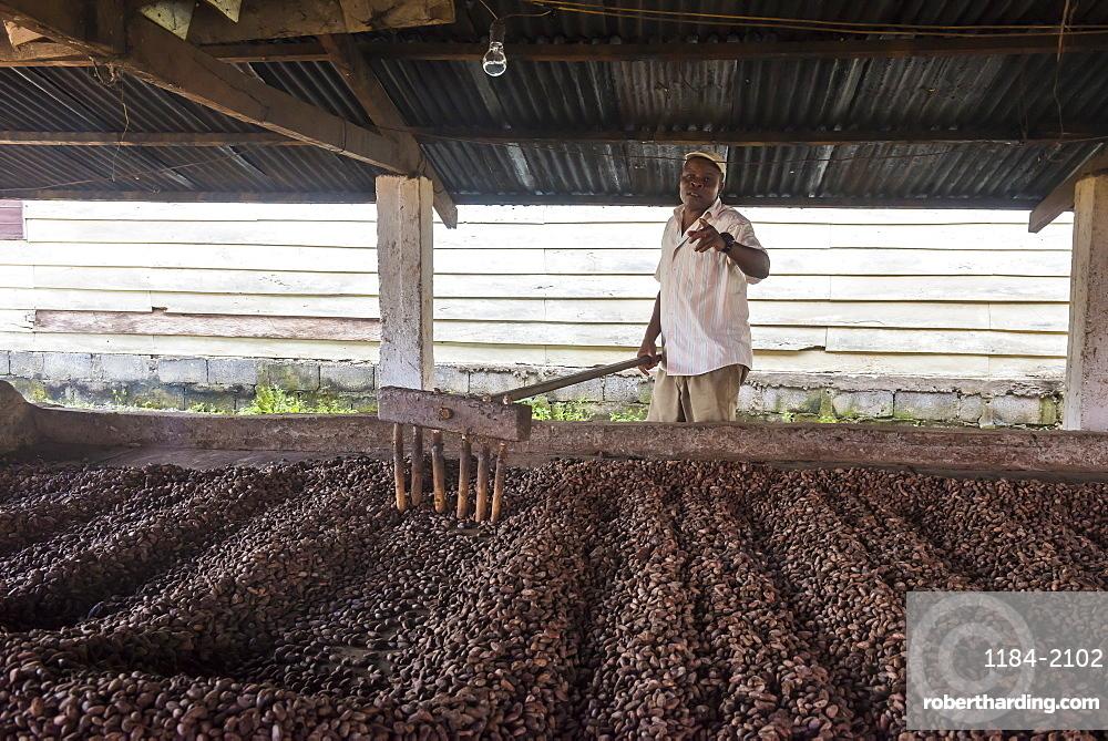 Roasting coca beans in a Cocoa factory, Batete, Bioko, Equatorial Guinea, Africa