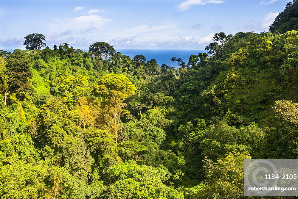 Jungle in Bioko, Equatorial Guinea