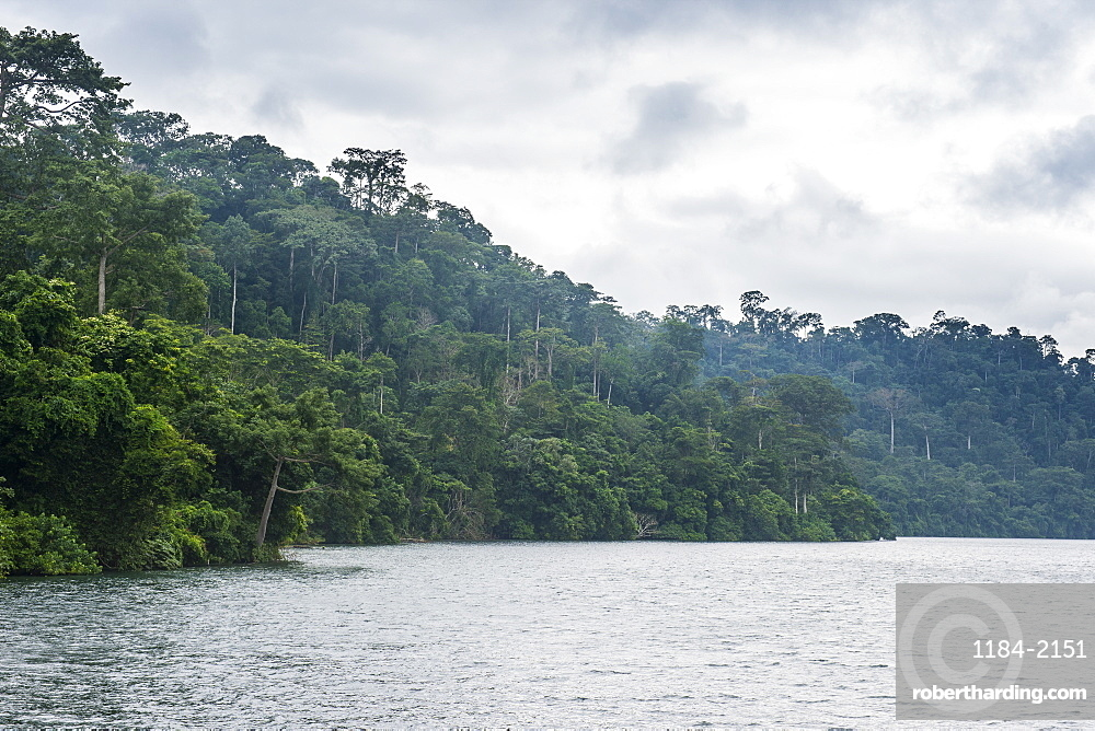 River and dense forest, Cameroon, Africa