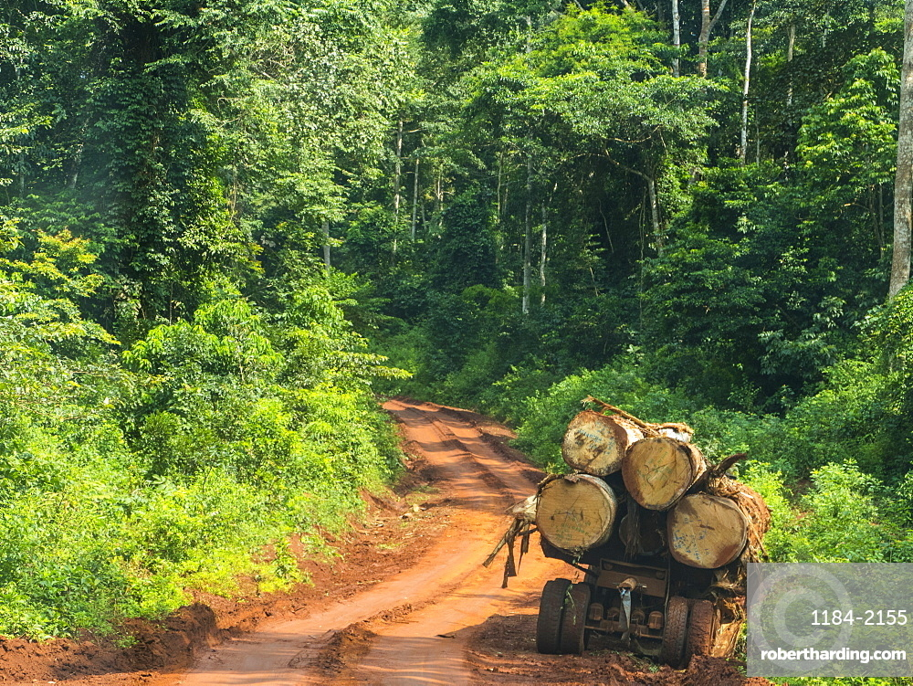 Logging truck in the jungle, Yokadouma, Eastern Cameroon