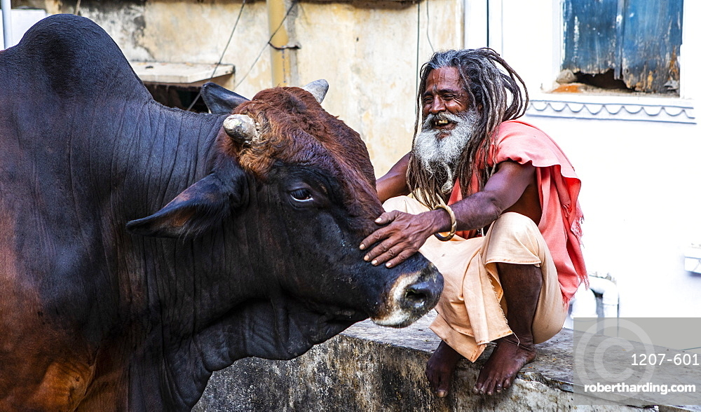 A local man and a buffalo in Udaipur, Rajasthan, India, Asia,