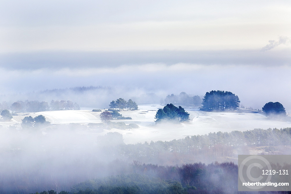Winter fog clearing to reveal frost and snow across the Delamere forest landscape, Cheshire, England, United Kingdom, Europe