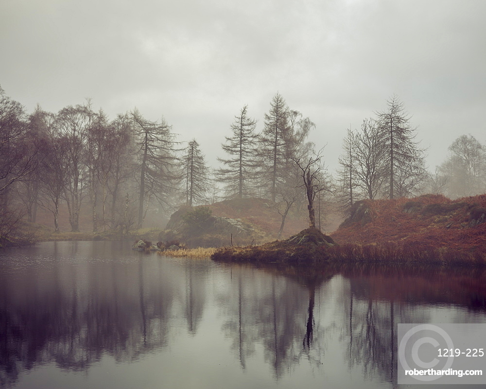 Bare trees surrounding the banks of Holme Fell Tarn on an overcast winters day in the Lake District National Park, UNESCO World Heritage Site, Cumbria, England, United Kingdom, Europe