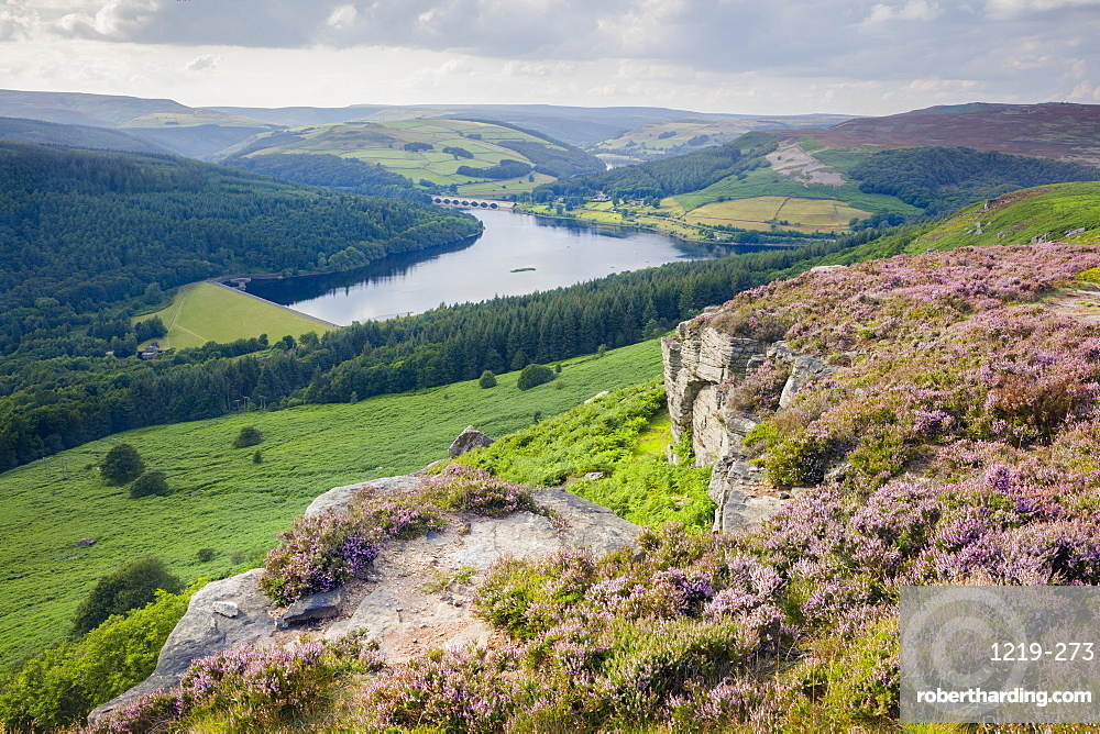 Summer heather in full bloom along Bamford Edge above the Ladybower reservoir in the Peak District