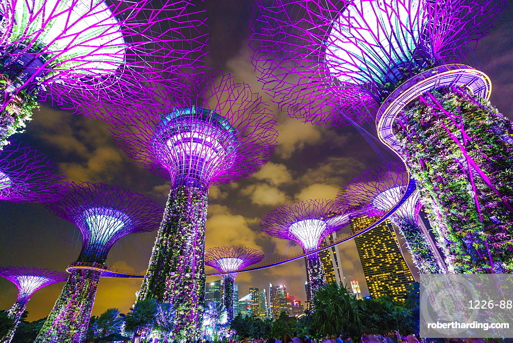 Supertree Grove in the Gardens by the Bay, a futuristic botanical gardens and park, illuminated at night, Marina Bay, Singapore, Southeast Asia, Asia