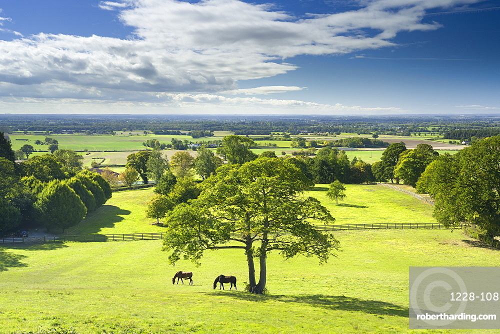 Horses grazing in a paddock at the hilltop village of Crayke in North Yorkshire, England, United Kingdom, Europe