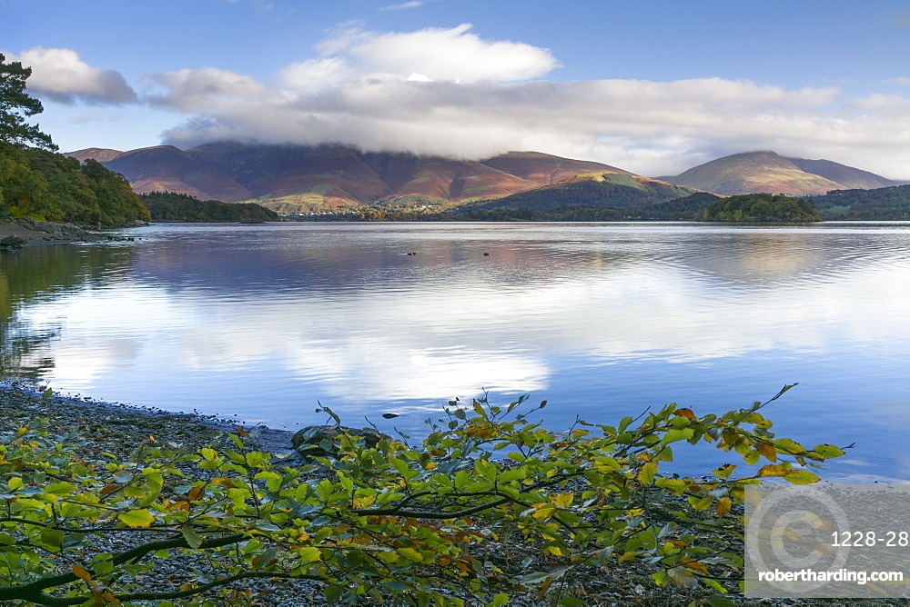 Skiddaw and Blencathra fells from Borrowdale, Derwent Water, Lake District National Park, Cumbria, England, United Kingdom, Europe