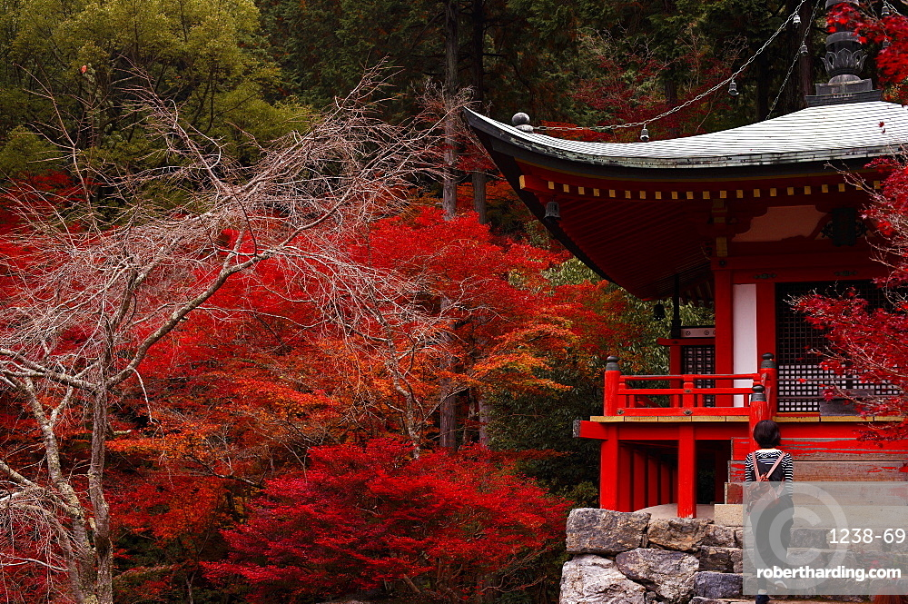 Climbing the stairs of the Bentendo hall of Daigo-ji temple, UNESCO World Heritage Site, Kyoto, Japan, Asia