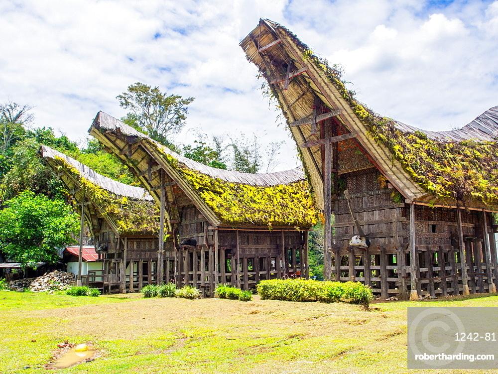 Tradional houses (tongkanon), Tana Toraja, Sulawesi, Indonesia, Southeast Asia, Asia