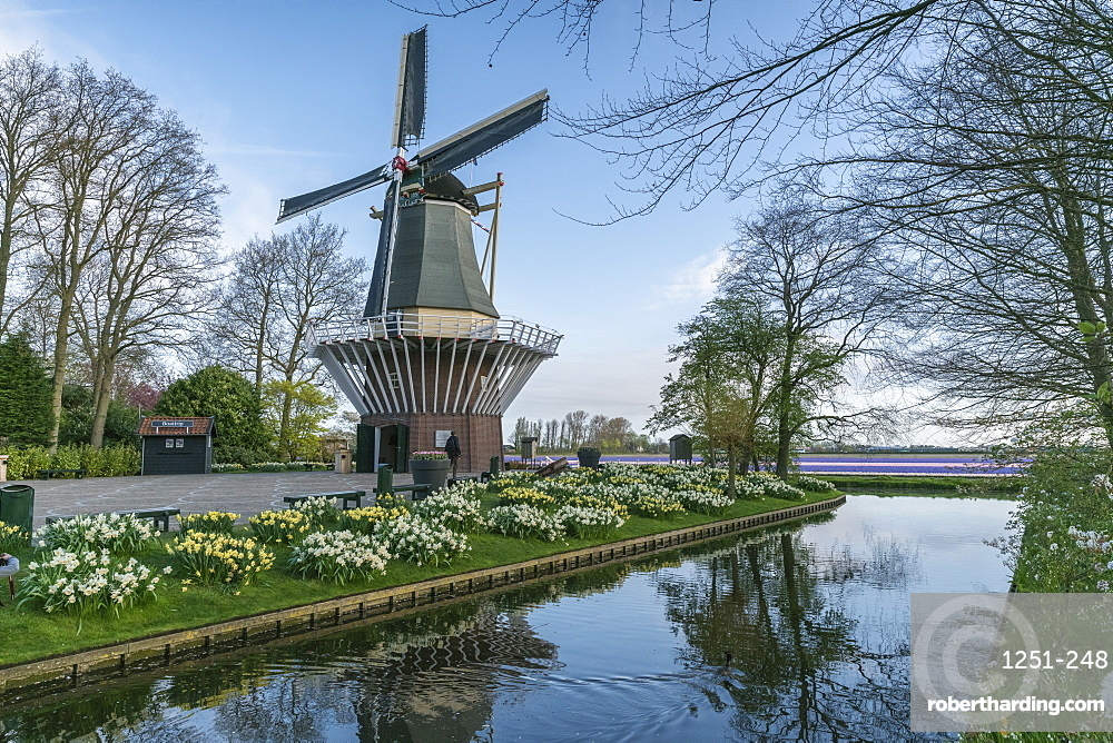 Windmill, daffodils and water canal at Keukenhof Gardens, Lisse, South Holland province, Netherlands, Europe
