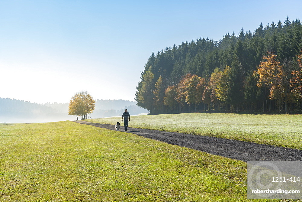 Man and dog walking along a road in the countryside, Heinstetten, Baden-Wurttemberg, Germany, Europe