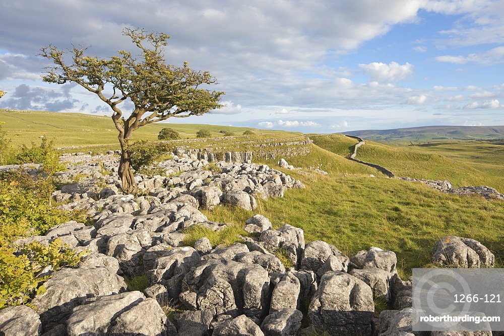 View towards Conistone Dib from Hill Castles scar above the village of Conistone, Wharfedale, Yorkshire Dales, Yorkshire, England, United Kingdom, Europe