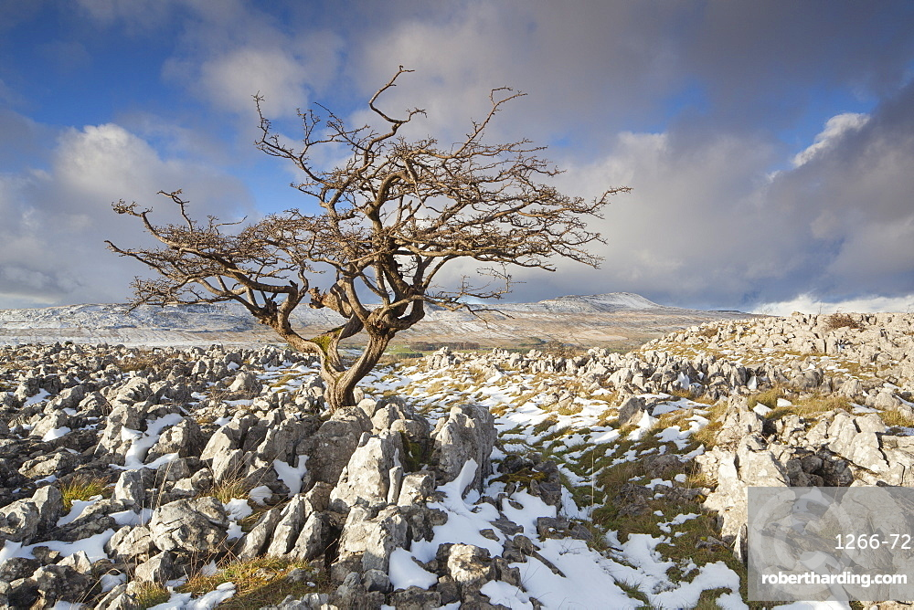 View to Whernside Hill from Limestone pavement at Ravens Scar above Southerscales Nature Reserve, Yorkshire Dales, North Yorkshire, Yorkshire, England, United Kingdom, Europe