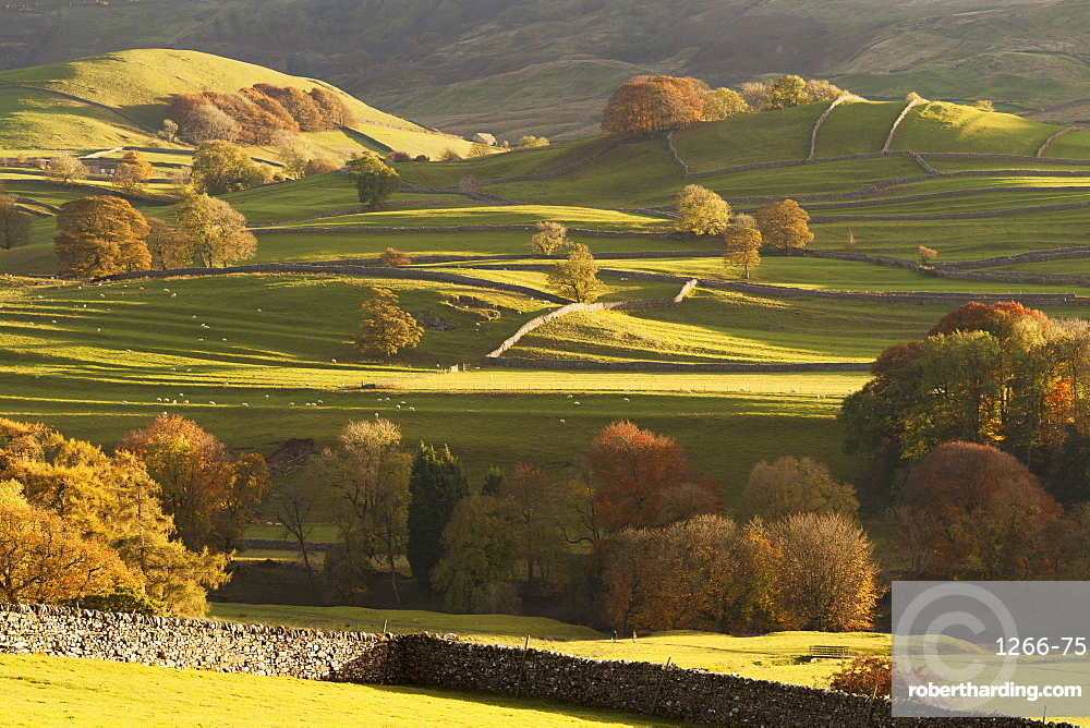Sunlit fields, hillside and autumn colour close to Grassington, Wharfedale, Yorkshire Dales National Park, North Yorkshire, UK