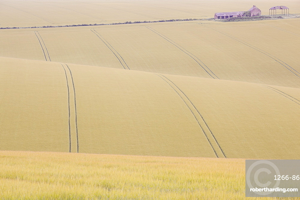 Rolling countryside of barley fields and farm and barn at Burdale near Fridaythorpe, Yorkshire Wolds, East Yorkshire, Yorkshire, England, United Kingdom, Europe