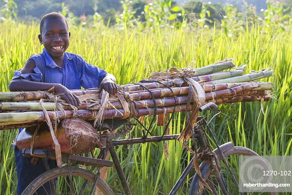 A boy smiling as he takes a rest from pushing a pile of sugar cane on his bike, Uganda, Africa