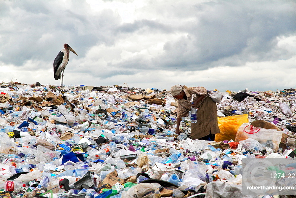 Woman working on one of the world biggest garbage dump with a stork waiting for food, in the Dandora slum of Nairobi, Kenya, East Africa, Africa