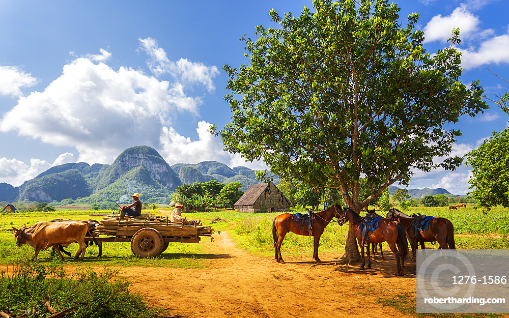 Farmer with oxcart carriage in Vinales, UNESCO World Heritage Site, Pinar del Rio Province, Cuba, West Indies, Caribbean, Central America