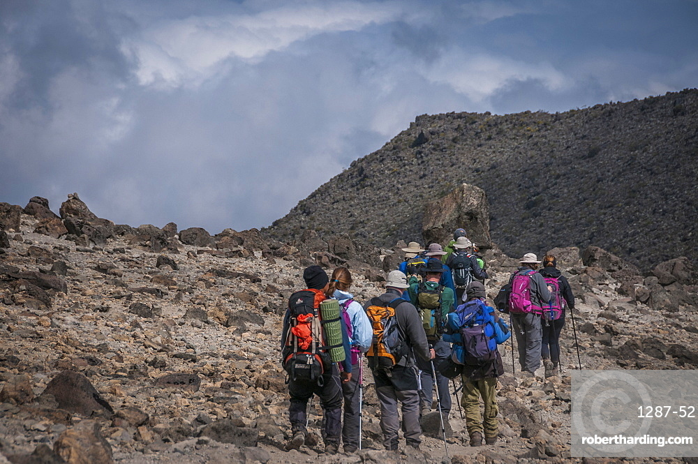 A group of trekkers with their local guide descending in Barranco Camp on the Machame Route on Mount Kilimanjaro, Tanzania, East Africa, Africa