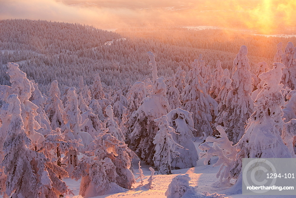 Brocken mountain in winter at sunset with pines covered with snow, Saxony Anhalt, Germany, Europe