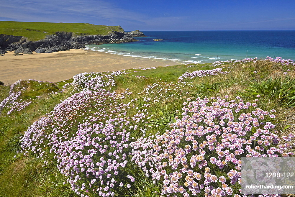 The sandy beach of Porth Joke seen from the thrift covered cliff tops, Cornwall, England, United Kingdom, Europe