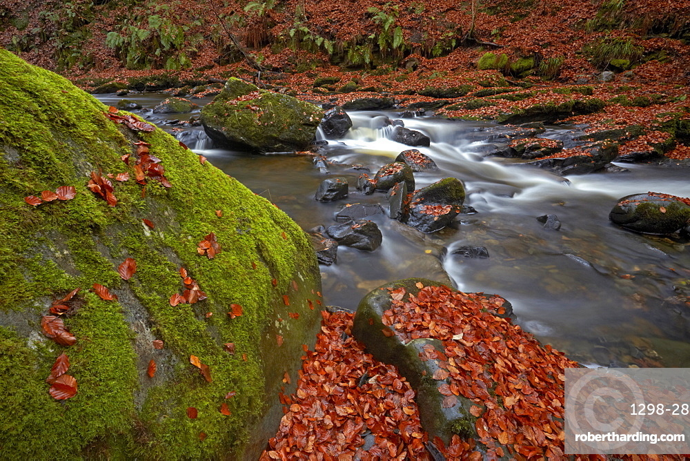 The Moness burn flowing through the Birks of Aberfeldy in late autumn, Perthshire, Scotland, United Kingdom, Europe