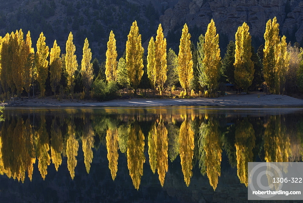 A row of poplar trees reflected in autumnal colours, San Carlos de Bariloche, Patagonia, Argentina.