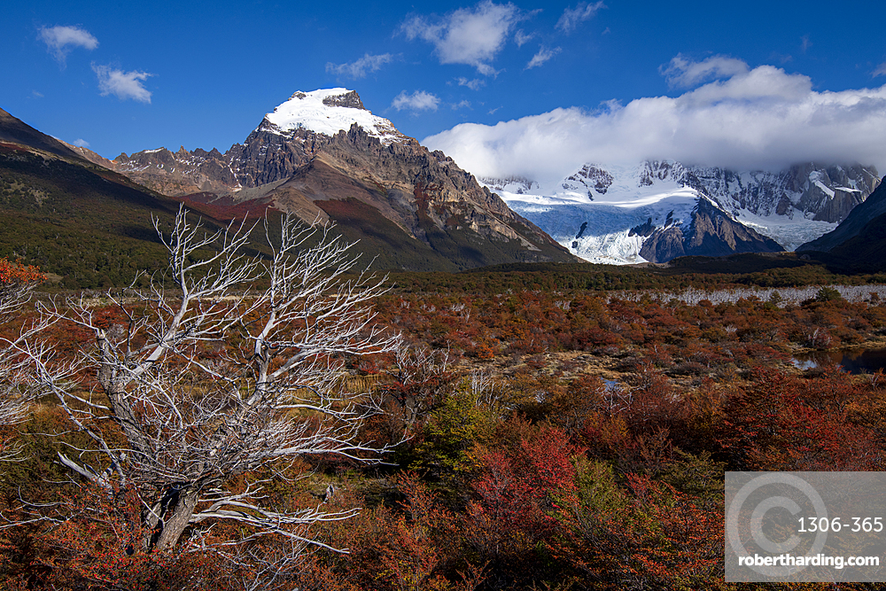Autumn colours on the way to Mt Fitz Roy, El Chalten, Santa Cruz province, Argentina