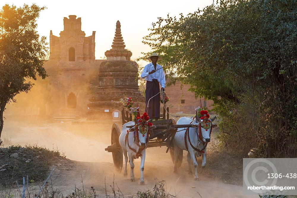 Bullocks and cart in dramatic evening light on a dusty road at Shwenanyindaw Monastic, Bagan (Pagan), Myanmar (Burma), Asia