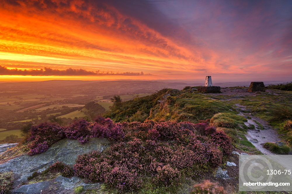 A dramatic sunrise at Cloudside with heather, Near Congleton, Cheshire.