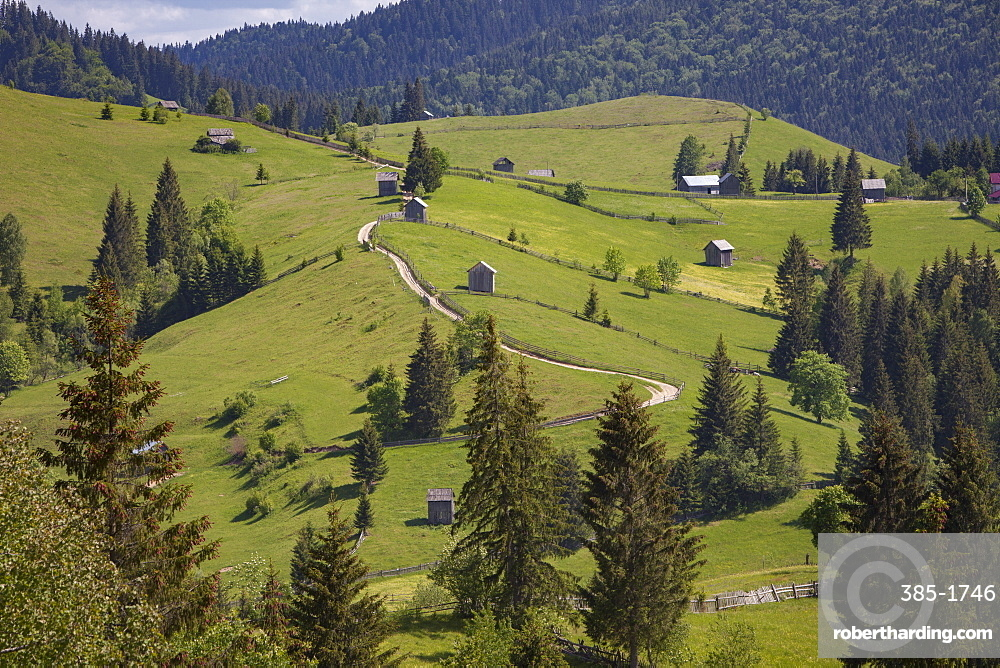 Countryside and farms between Sucevita to Vatra Moldovitei in Carpathian foothills, Bukovina, Romania, Europe