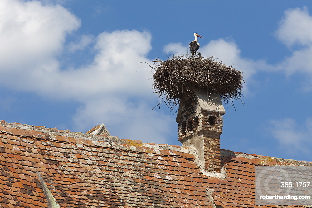 Stork and chicks nest on chimney, Merghindeal Village, Transylvania, Romania, Europe
