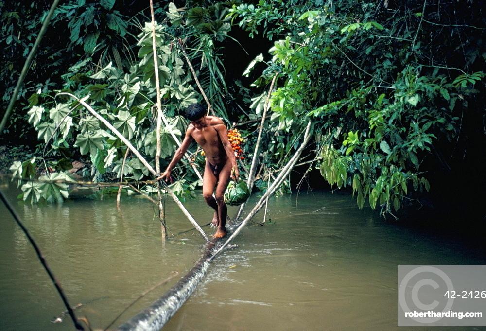 Yanomami man carrying peach palm fruit crossing a river, Brazil, South America