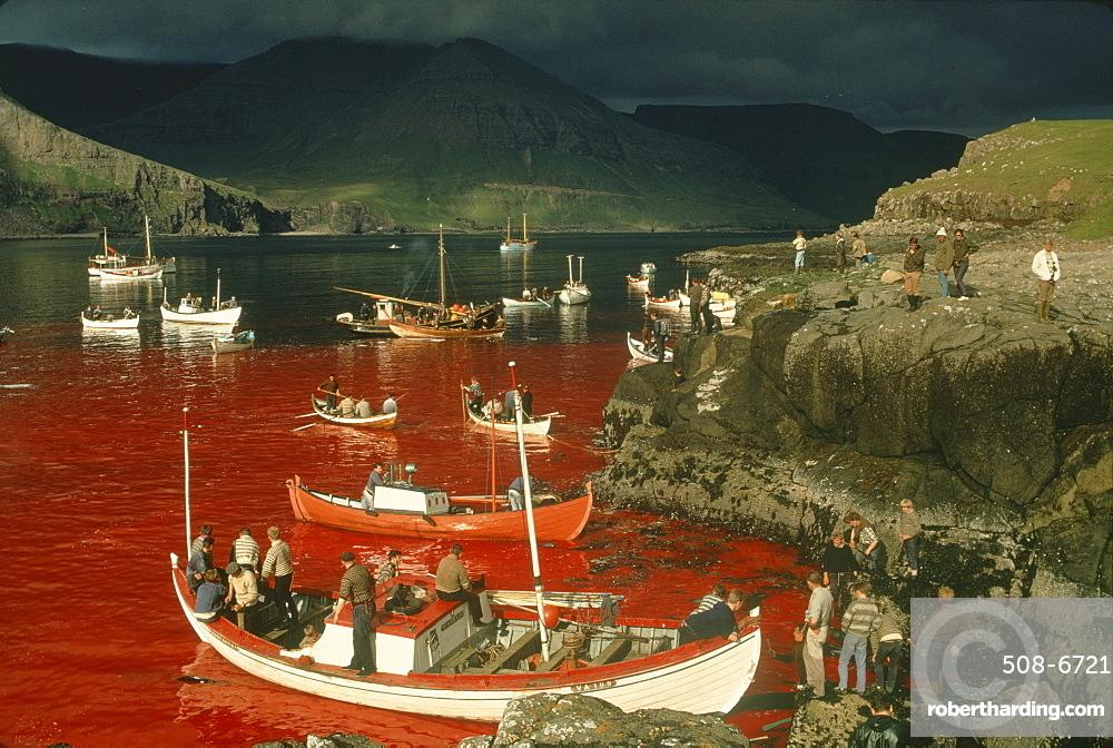 Whaling Tindholmur Bay Vagar Island Stock Photo