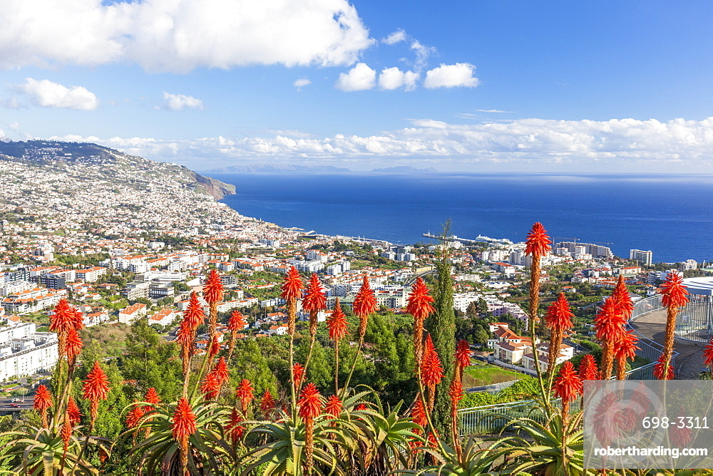 View over Funchal, capital city of Madeira, city and harbour with red Kranz aloe flowers (Aloe arborescens), Madeira, Portugal, Atlantic, Europe