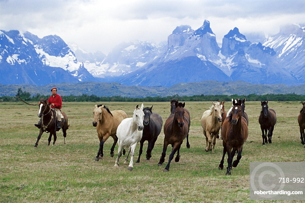 A group of gauchos riding horses, with the Cuernos del Paine (Horns of Paine) mountains behind, Torres del Paine National Park, Patagonia, Chile, South America
