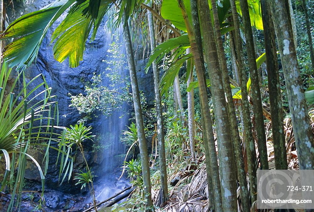 Waterfall, Vallee de Mai National Park, island of Praslin, Seychelles, Indian Ocean, Africa